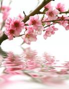 fleurs beauté, espace athena, st raphael beauté